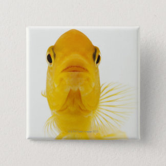 Also known as Comet-tailed goldfish. Hardy Pinback Button