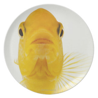 Also known as Comet-tailed goldfish. Hardy Party Plates