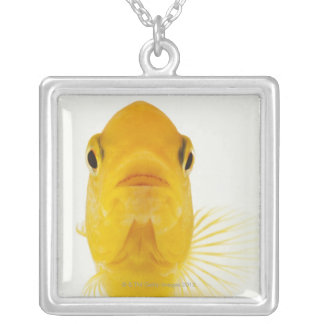 Also known as Comet-tailed goldfish. Hardy Silver Plated Necklace