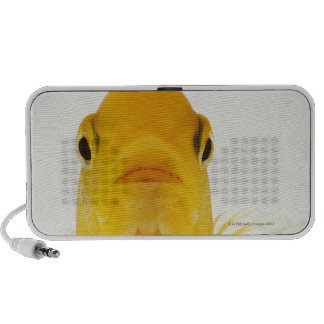 Also known as Comet-tailed goldfish. Hardy Travelling Speaker