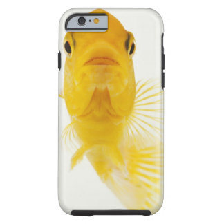 Also known as Comet-tailed goldfish. Hardy Tough iPhone 6 Case