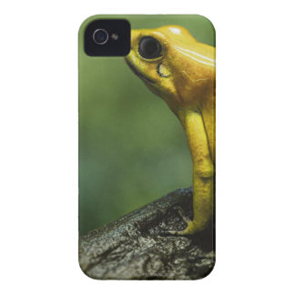 also known as Golden Dart Frog; endemic to the iPhone 4 Cover
