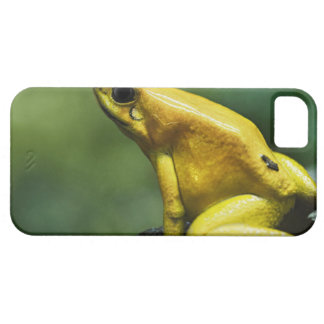 also known as Golden Dart Frog; endemic to the iPhone SE/5/5s Case