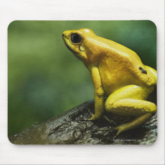 also known as Golden Dart Frog; endemic to the Mouse Pad