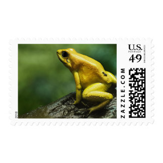 also known as Golden Dart Frog; endemic to the Postage