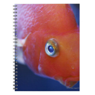 Also known as the Blood Parrot or Bloody Parrot. Spiral Notebook