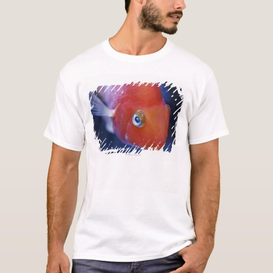 Also known as the Blood Parrot or Bloody Parrot. T-Shirt