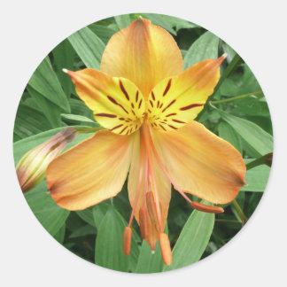 Alstroemeria Classic Round Sticker