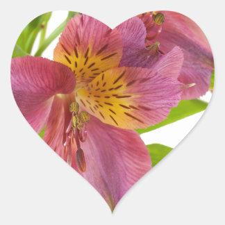 alstroemeria flowers heart sticker