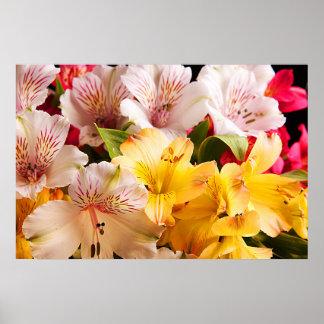 Alstroemeria Flowers Poster/Print Poster