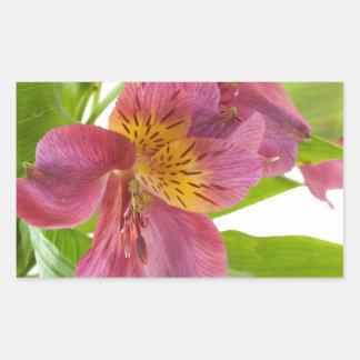 alstroemeria flowers rectangular sticker
