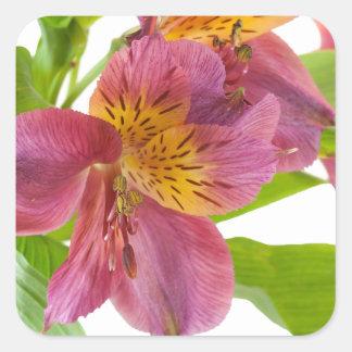 alstroemeria flowers square sticker