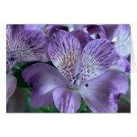Alstroemeria Lily Blank Greeting Card
