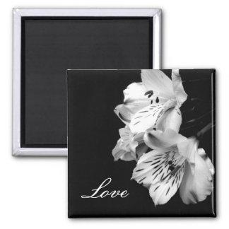 Alstroemeria Lily Love Magnet