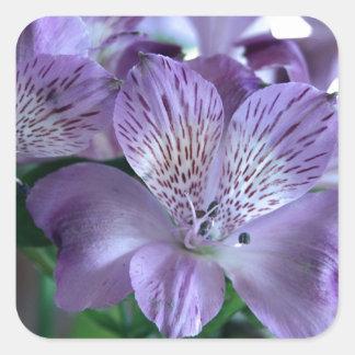 Alstroemeria Lily Square Sticker