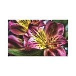 Alstroemeria Peruvian Lily flower Canvas Print