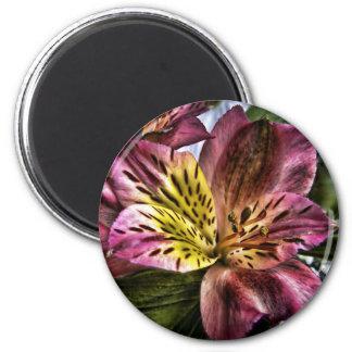 Alstroemeria Peruvian Lily flower fridge magnet