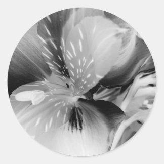 Alstroemeria Peruvian Lily Flower in Black & White Classic Round Sticker