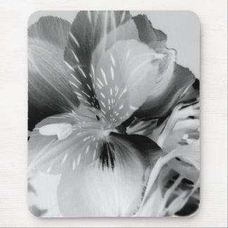 Alstroemeria Peruvian Lily Flower in Black & White Mouse Pad