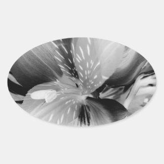 Alstroemeria Peruvian Lily Flower in Black & White Oval Sticker