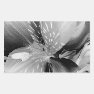Alstroemeria Peruvian Lily Flower in Black & White Rectangular Sticker