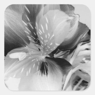 Alstroemeria Peruvian Lily Flower in Black & White Square Sticker