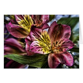 Alstroemeria Peruvian Lily flower note card