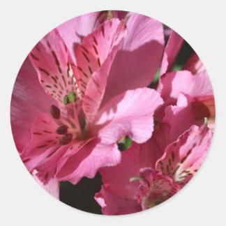Alstroemeria Pink Flower Stickers