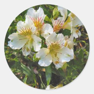 alstroemeria pretty flowers classic round sticker