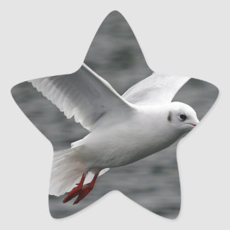 alta gaviota hermosa del vuelo sobre el océano pegatina forma de estrella