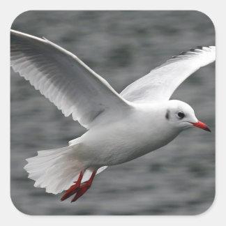 alta gaviota hermosa del vuelo sobre el océano pegatina cuadrada