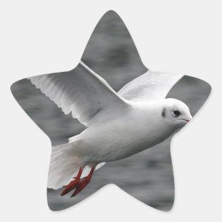 alta gaviota hermosa del vuelo sobre el océano pegatina en forma de estrella