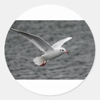 alta gaviota hermosa del vuelo sobre el océano pegatina redonda