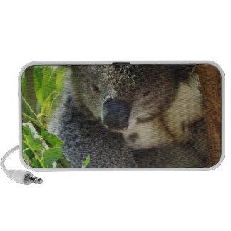 Altavoces casuales de la koala
