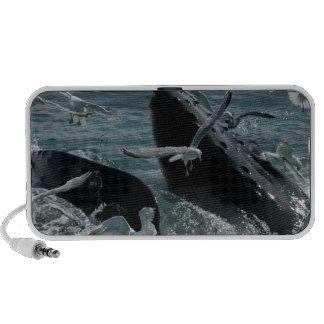 Altavoces de la ballena jorobada