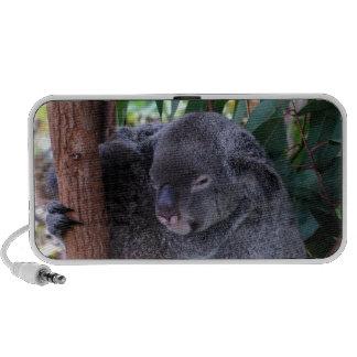 Altavoces de la familia de la koala