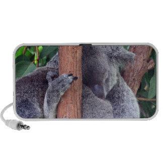 Altavoces de la familia del oso de koala