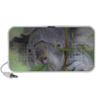 Altavoces de la koala