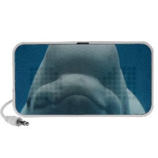 Altavoces dulces de la ballena de la beluga