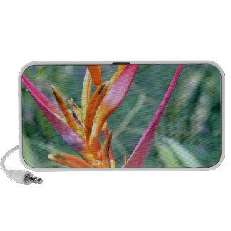 Altavoces hawaianos de la flor de Heliconia