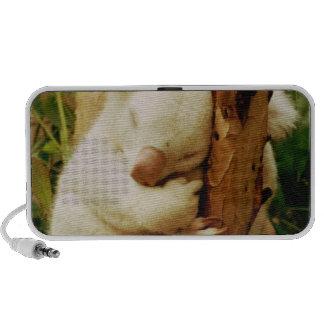 Altavoces portátiles blancos del oso de koala