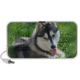Altavoces portátiles del perro del husky siberiano