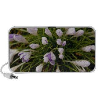 altavoces púrpuras de la primavera