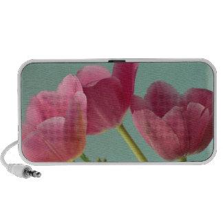 Altavoces rosados de los tulipanes