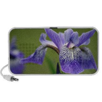 Altavoces siberianos del iris