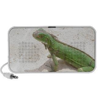 Altavoces verdes del lagarto de la iguana