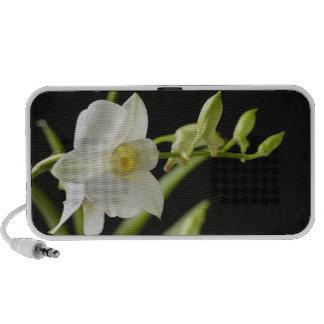 Altavoz blanco de la orquídea (3)