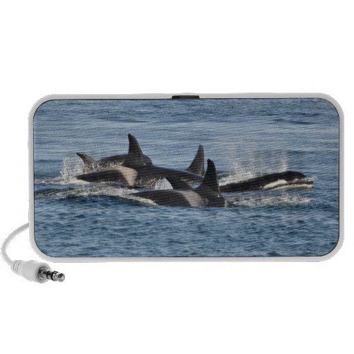 Altavoz de la orca