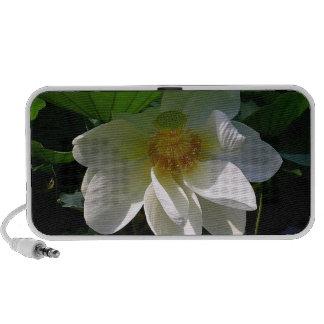 Altavoz del Doodle con la flor de Lotus blanco del
