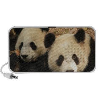 Altavoz del Doodle de los osos de panda
